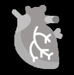 καρδιαγγειακό - κυκλοφορικό